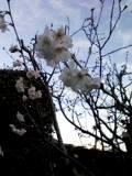春だね〜(*~_~*)